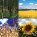Biomassza Fórum