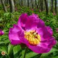 Sétatéri esték - Tavasztól tavaszig